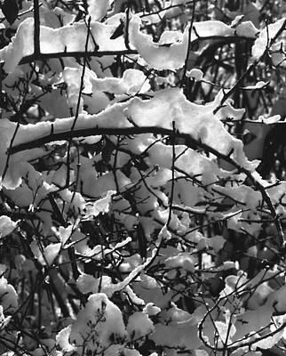 Photograph - Tactu Gelida Translucentia by Terrance DePietro