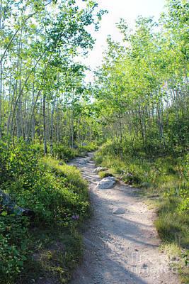 Pine Trees Photograph - Taggart Lake Trail by Kathleen Garman