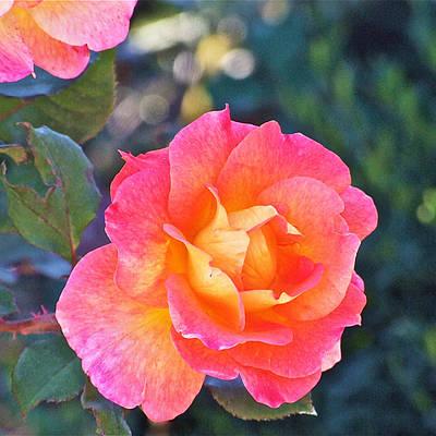 Photograph - Tahitian Sunset Rose 4 by Janis Nussbaum Senungetuk