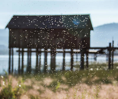 Photograph - Tahoe Boat House Flies by Wes Jimerson