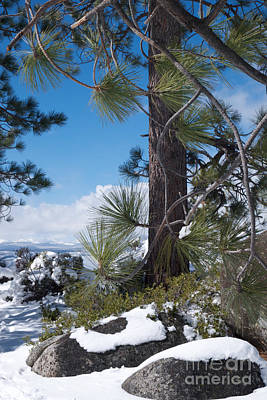 Photograph - Tahoe Pines In Winter by Vinnie Oakes