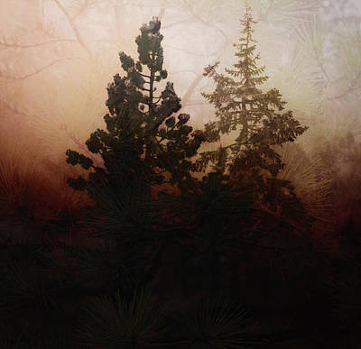 Digital Art - Tahoe Pines by Richard Ricci