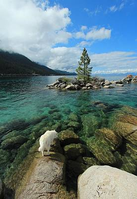Photograph - Tahoe Tap ...nectar Of The Gods by Sean Sarsfield