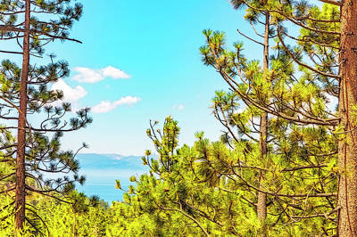 Photograph - Tahoe Through The Pines by Nancy Marie Ricketts