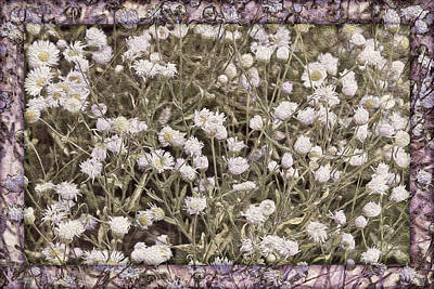 Digital Art - Tahoka Daisies by Becky Titus