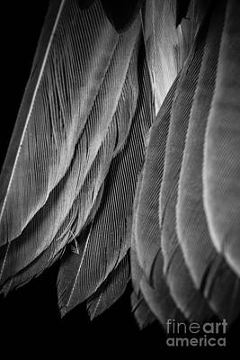 Photograph - Tail Feathers Abstract by Edward Fielding