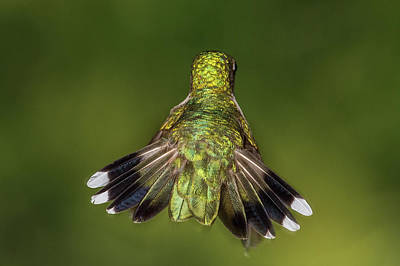 Photograph - Tail Feathers by Paul Freidlund