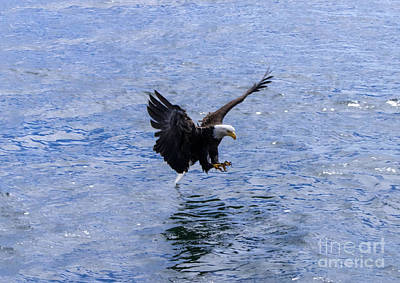 Photograph - Tail Landing by Louise Magno