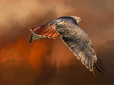 Buzzard Wall Art - Photograph - Tail Light On by Donna Kennedy