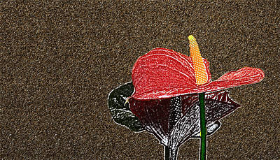 Photograph - Tailflower by David Pantuso