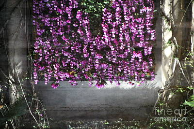 Photograph - Taiwanese Orchid Curtain - Reflection by Jacqueline M Lewis