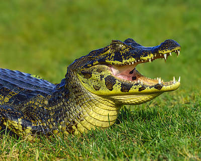Reptiles Royalty-Free and Rights-Managed Images - Take A Deep Breath by Tony Beck