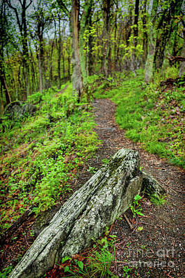 Photograph - Take A Hike In The Blue Ridge by Dan Carmichael