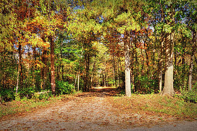 Take A Walk In The Woods Print by William Sturgell