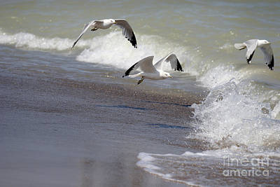 Photograph - Take Flight by Jeannie Burleson