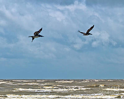 Photograph - Take Flight  by Ken Frischkorn