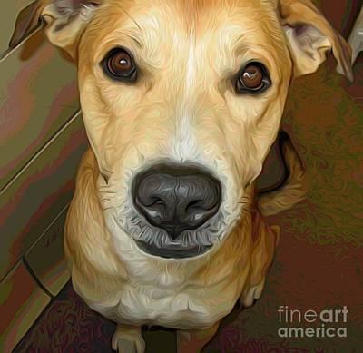 Photograph - Take Me Home 2 Sweet Dog At Spca by Rose Santuci-Sofranko