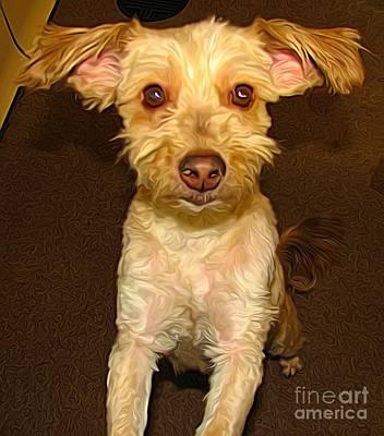 Photograph - Take Me Home 3 Cute Dog At Spca by Rose Santuci-Sofranko
