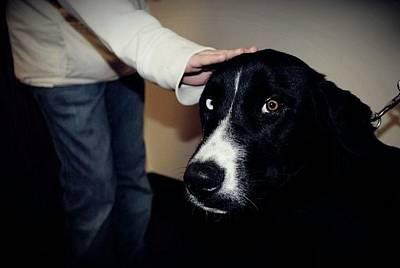 Dog Photograph - Take Me Home by Laura Pineda