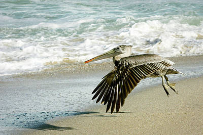 Photograph - Take Off by Dawn Currie