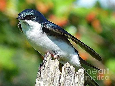 Basketball Patents - Take Off or Landing - Tree Swallow by Cindy Treger