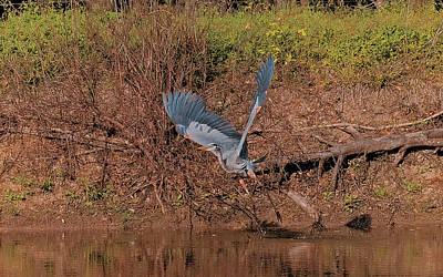 Photograph - Take Off by Philip A Swiderski Jr