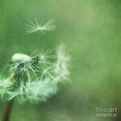 Photograph - Take Off by Priska Wettstein