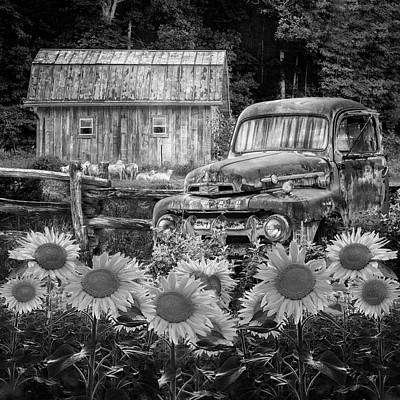 Photograph - Take Us For A Ride In The Sunflower Patch Black And White by Debra and Dave Vanderlaan
