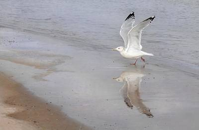 Beach Action Wall Art - Photograph - Takeoff by Dan Holm
