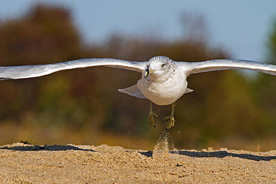 Photograph - Takeoff by David Freuthal