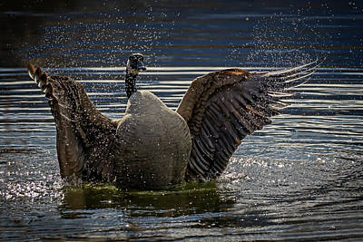 Photograph - Taking A Bath by Inge Riis McDonald