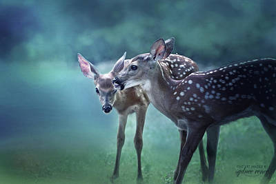 Missouri Whitetail Photograph - Taking Care Of Sister by Sydnee Crain