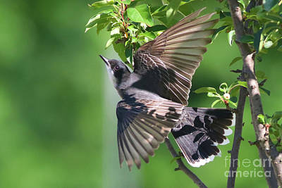 Photograph - Taking Flight by Debbie Parker