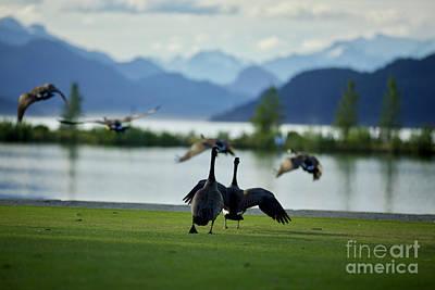 Photograph - Taking Flight by Jason Gallant