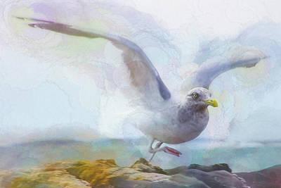 Bay Photograph - Taking Flight by Paul Malen