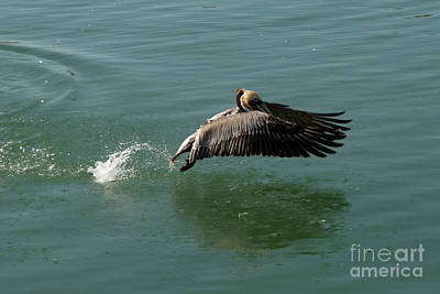Taking Flight Art Print by Rod Wiens