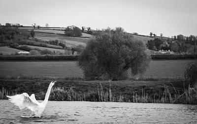 Photograph - Taking Flight by Stewart Scott