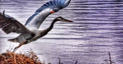 Taking Flight Art Print by Sumoflam Photography