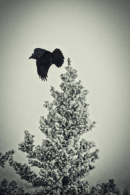 Photograph - Taking Flight Vintage by Cathy Mahnke