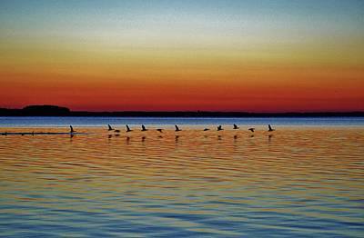 Photograph - Taking Flight, A Flock Of Geese Take Off From A Sunset Swim In The Bay With A Colorful Evening Sky by William Bartholomew
