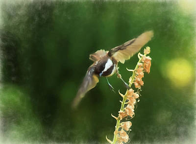 Photograph - Chickadee In Flight 2 by Marilyn Wilson