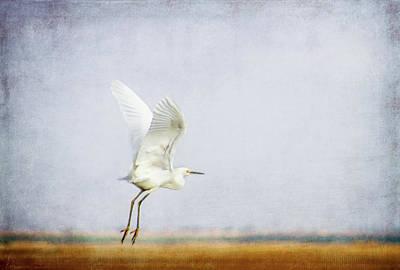 Yellow Beak Mixed Media - Taking Off by Terry Davis