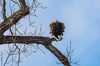 Photograph - Taking The Afternoon Watch by Yeates Photography