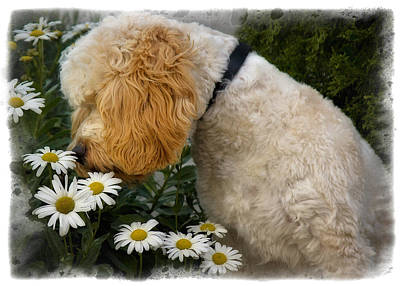 Puppy Digital Art - Taking Time To Smell The Flowers by Susan Candelario