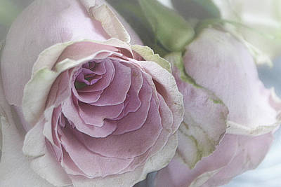 Photograph - Talae Roses A Pair by Nadalyn Larsen