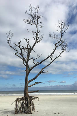 Photograph - Talbot Stilt Tree #1 by Paul Rebmann