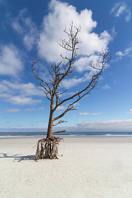 Photograph - Talbot Stilt Tree #2 by Paul Rebmann
