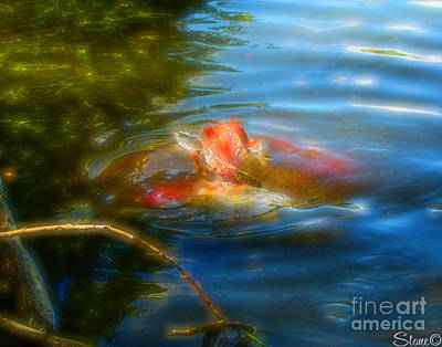 Photograph - Tale Of The Wild Koi 2  by September  Stone