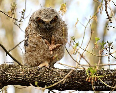 Photograph - Talk To The Talons by Heather King