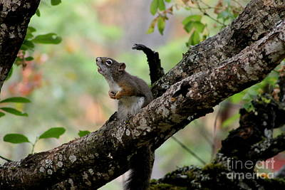 Photograph - Talking Squirrel by Leone Lund